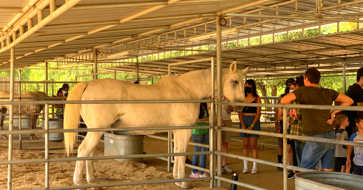 A group of people looking at a horse in a pen Description automatically generated with low confidence